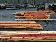 cedar lumber fresh cut from the sawmill